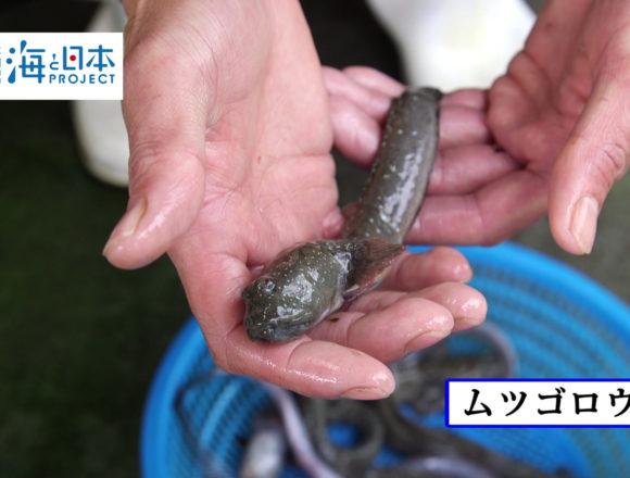 福岡県-C10-s2