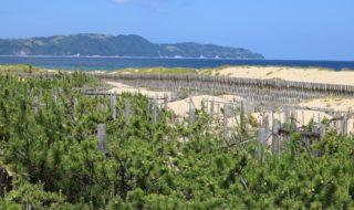 海の中道 マツ林を守ろう