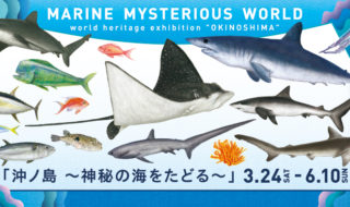 沖ノ島 神秘の海をたどる 1