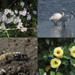 福岡和白干潟の自然写真展